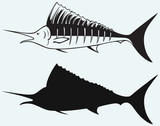 Sailfish saltwater fish isolated on blue background poster