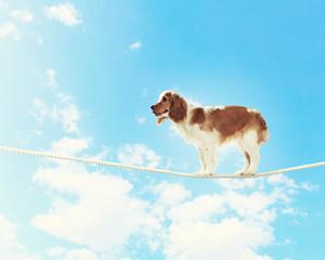 Dog balancing on rope