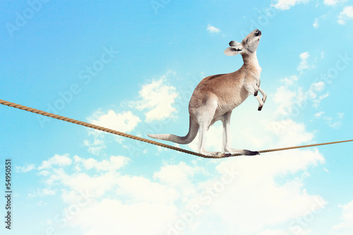 In de dag Kangoeroe Kangaroo walking on rope