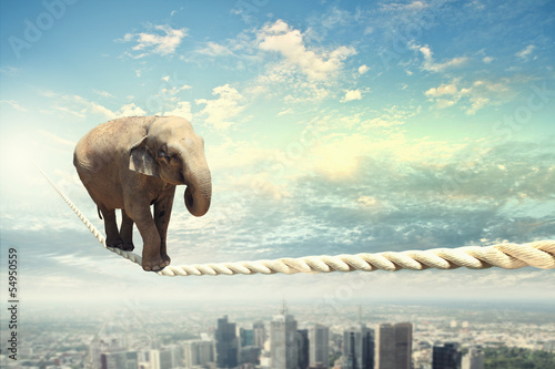 Tuinposter Olifant Elephant walking on rope