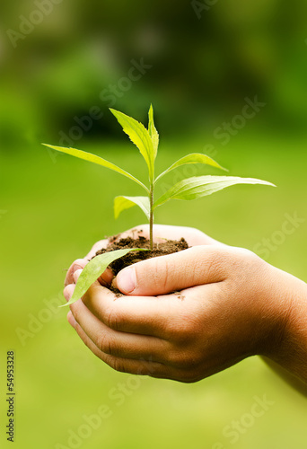 Children`s hands holding young plant against spring green backgr