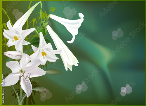 bunch of white lily flowers on green background