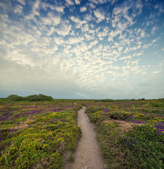 flowering heath and a beautiful sunset