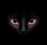 Eyes of a wild black siamese cat hiding in the darkness