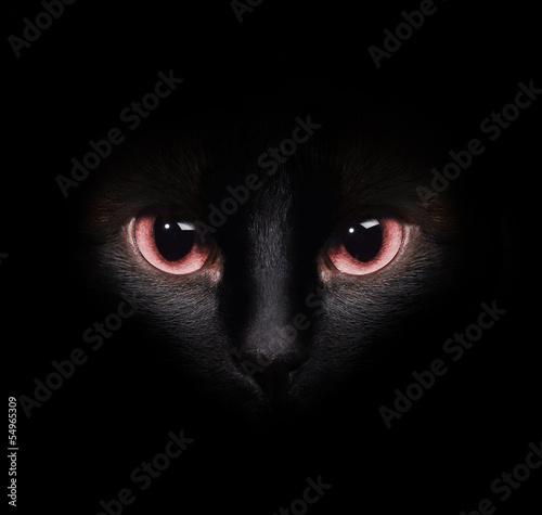 oczy-dziki-czarny-kot-siamese-ukrywanie-sie-w-ciemnosci