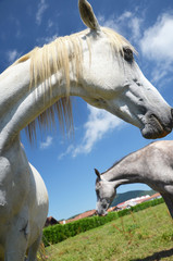 two horses close-up