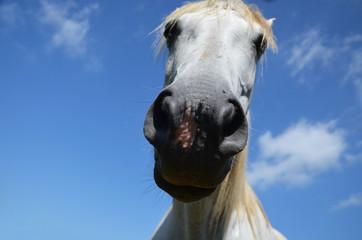 snout a horse close up