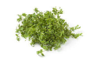 Fresh green chickweed
