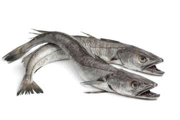 Two Hake fishes