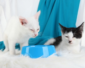 Two kitten with food bowl on soft carpet on fabric background
