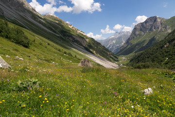 Vallée et alpage fleuri
