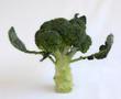 Vegetables 39
