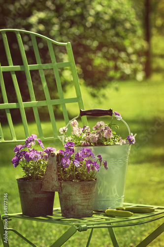 Spring violets in pots on garden chair