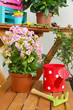 Many beautiful flowers in pots in room close-up