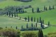 Zypressenkurven - cypress curve 47