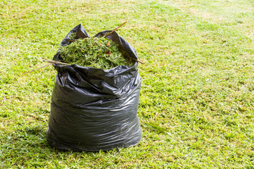 Grass in garbage bag
