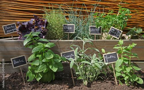 Papiers peints Herbe, epice herbes aromatiques