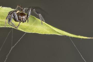 Spider close up portrait on a leaf