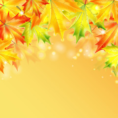 autumn maple leaves on a yellow sparkling background.autumn back