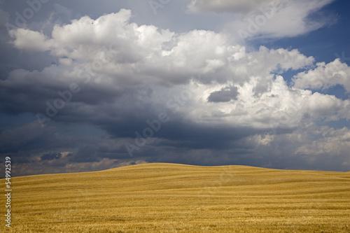 Italien, Toskana, Gewitterwolken über Maisfeld