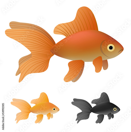 Goldfish set