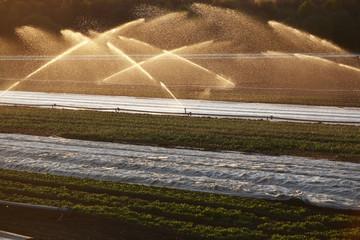 Deutschland, Bewässerungsanlage auf dem Feld