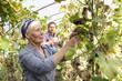 Deutschland, Sachsen, Mann und Frau in der Farm