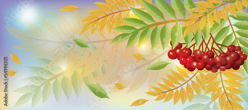 Autumn banner with mountain ash berry, vector