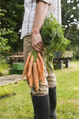 Mann hält Bündel von Karotten