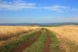 Дорога среди поля пшеницы