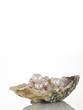Perlen in einer Austernschale