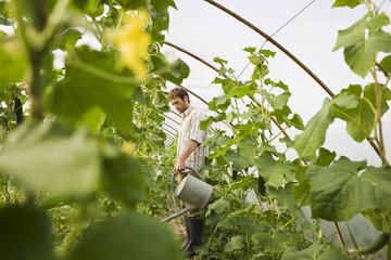 Mann im Gewächshaus bewässert Pflanzen
