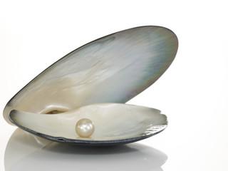 Muschel mit Perle
