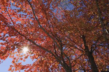 USA, New England, Ahornbaum, Herbst Farben