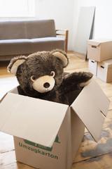 Teddy in einem Karton