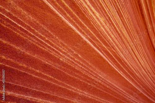 USA, Utah, North Coyote Buttes, Gestreift roten Felsen, full-frame