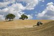 Italien, Toskana, Traktor auf Maisfeld