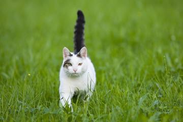 Katze schleicht auf der Wiese