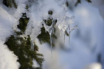Deutschland, Bayerischer Wald, Tannenzweig mit Schnee und Eiszapfen