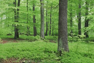 Deutschland, Bayern, Wald im Frühjahr