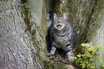 Katze auf Baumstamm entblößte Zähne