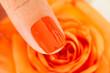Female Finger On Flower