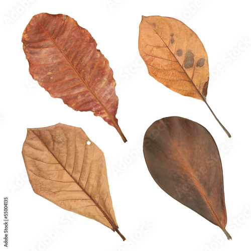 Dried leaves isolated on white background