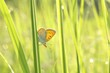 Close-up of butterfly in the grass in the morning