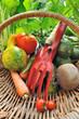 outils de jardinage et panier de légumes