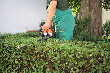 Man trimming hedge_1