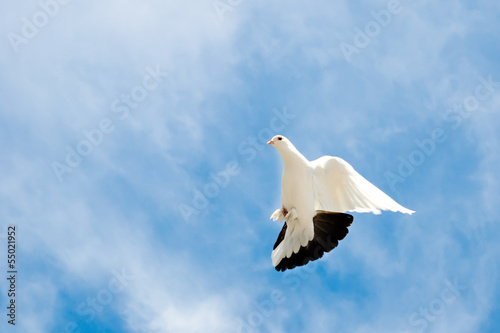 Fotobehang dove in the sky