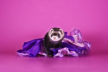 hilarious ferret