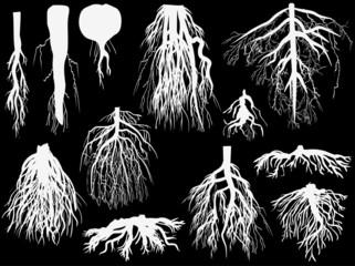 set of white roots isolated on black