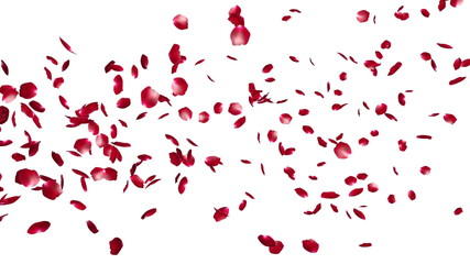 Rose Petals Flying Particles, against white